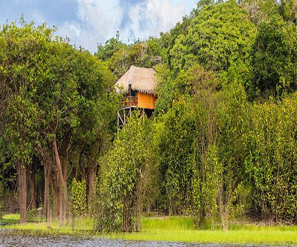 Découverte de la forêt amazonienne au Juma Lodge