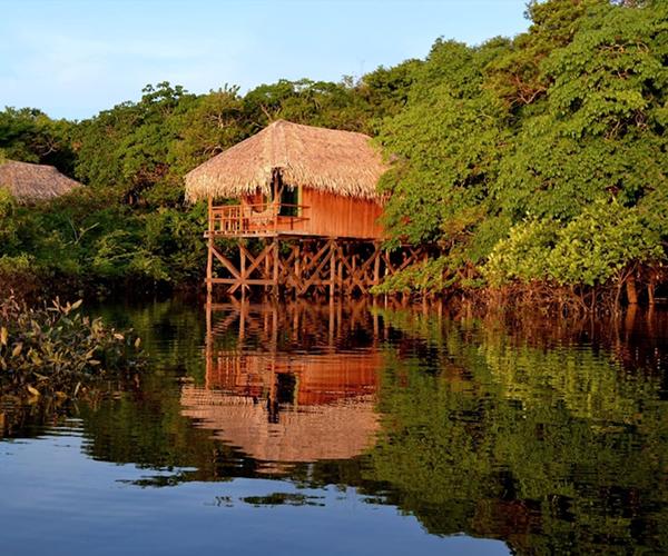 Randonnée en forêt amazonienne à partir du Juma Lodge