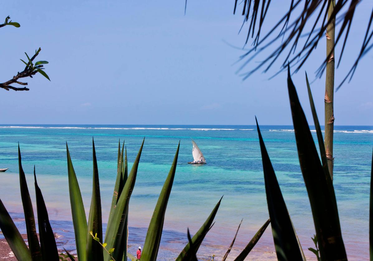 Explorez la barrière de corail à Diani