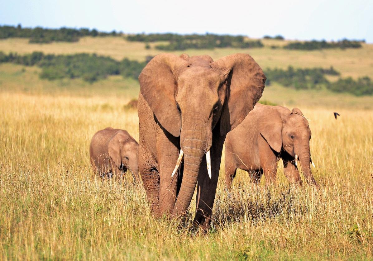 Réserve de Masaï Mara