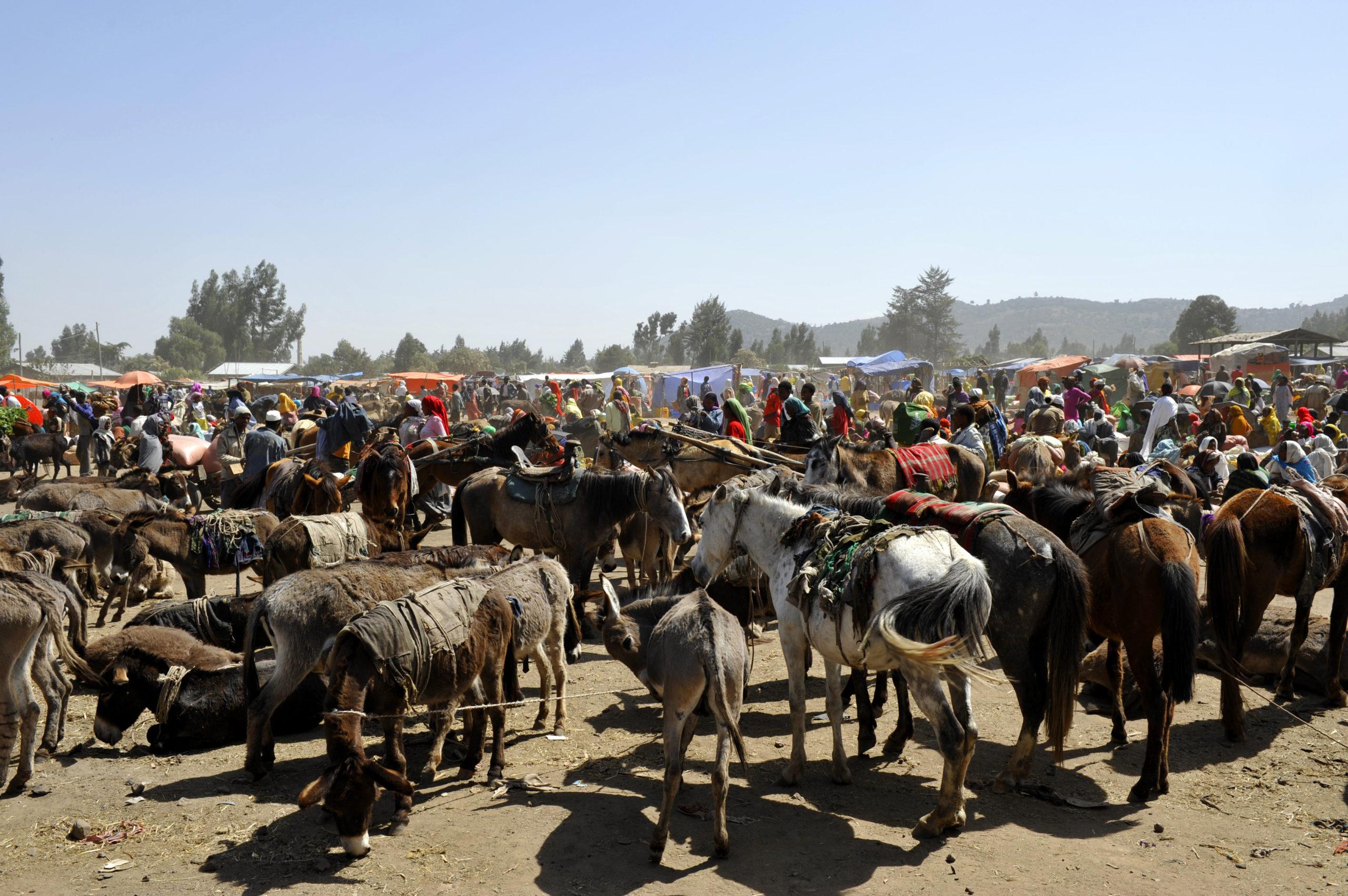 Rencontre avec la tribu Dorzé au marché de Chencha