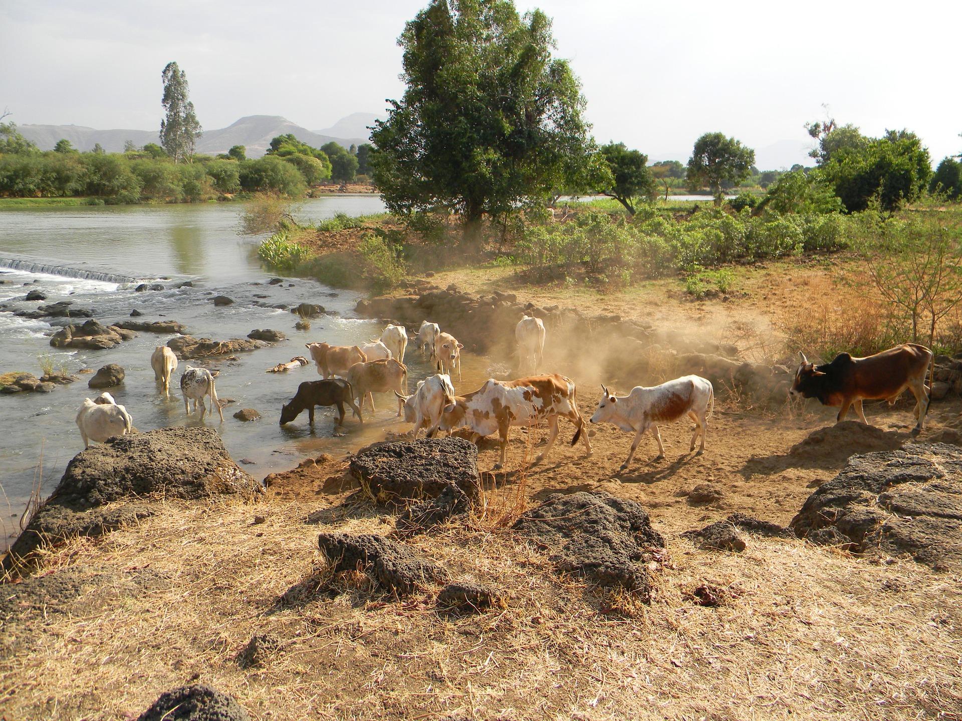 Tsis Isat, chutes du Nil