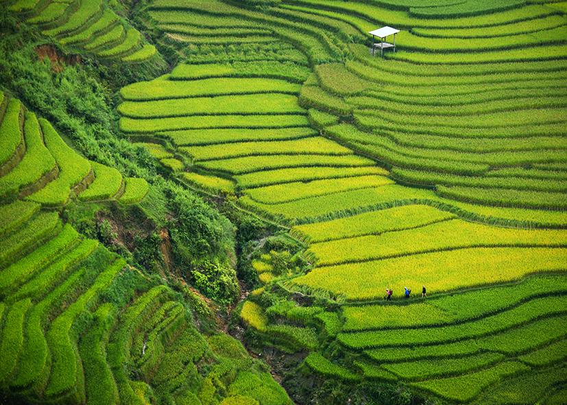 Randonnée dans les rizières en terrasses des montagnes de Dong Van
