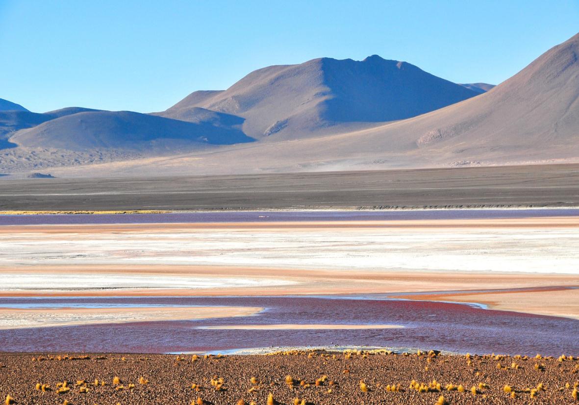 Couleurs intenses de la Laguna Colorada