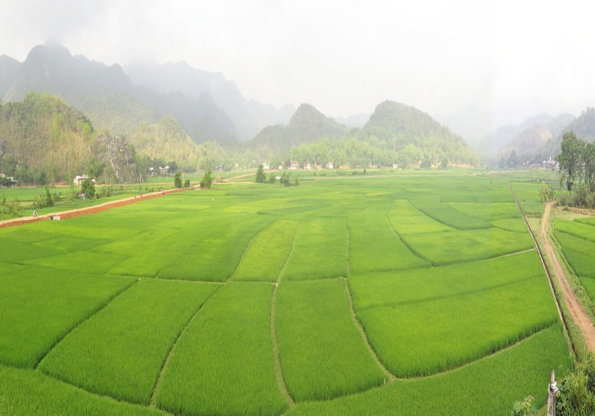 Les rizières de Mai Cau