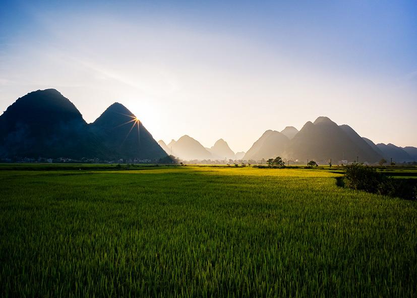 Panorama sur les rizières de  Sapa