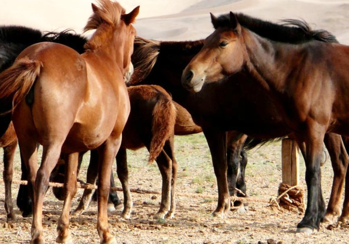 Balade à cheval dans la vallée de l'Orkhon