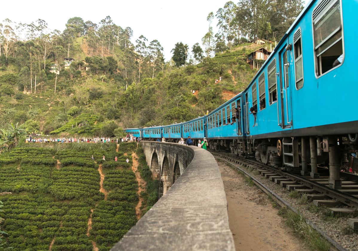 Train de Ella au milieu des plantations de thé