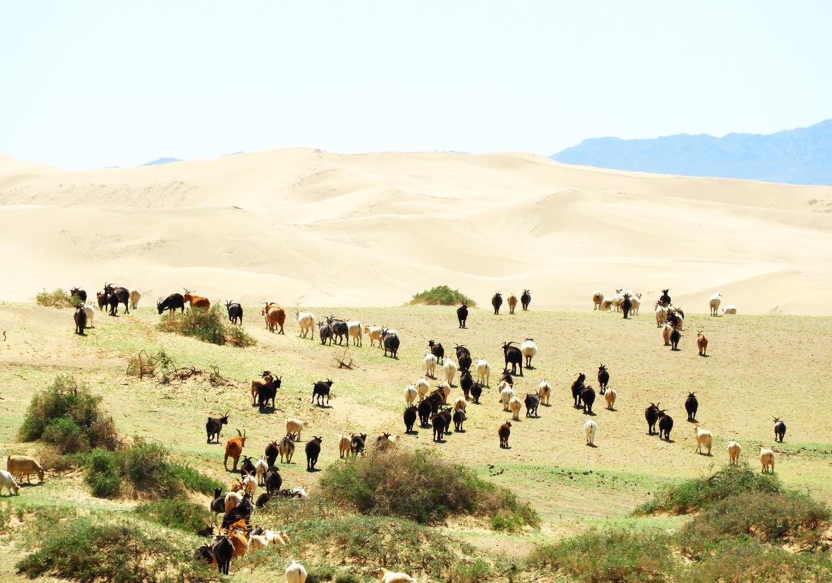 Steppes du désert de Gobi