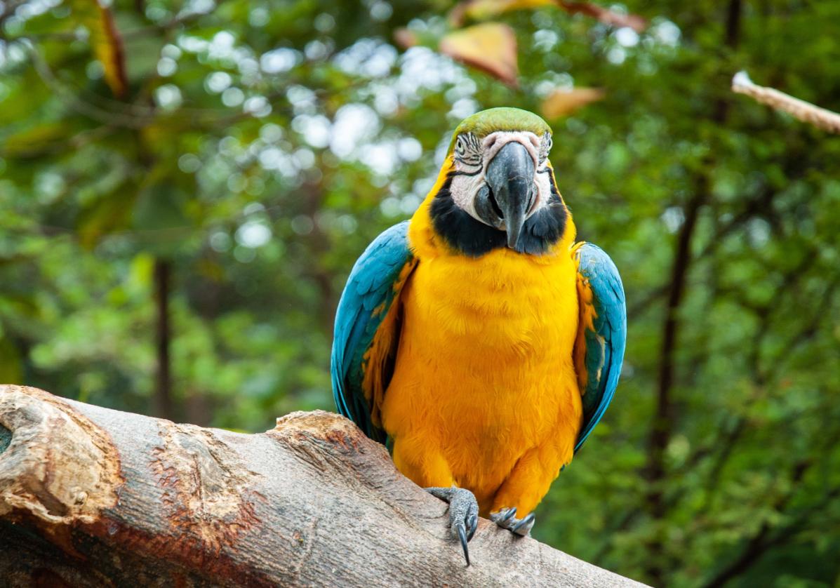 Observation de la faune dans la foret amazonienne
