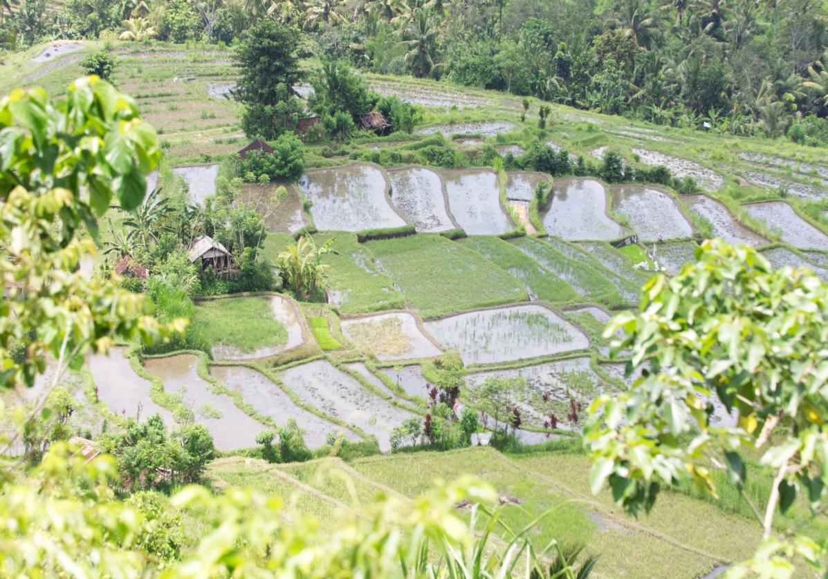 Visite de l'Est de Bali