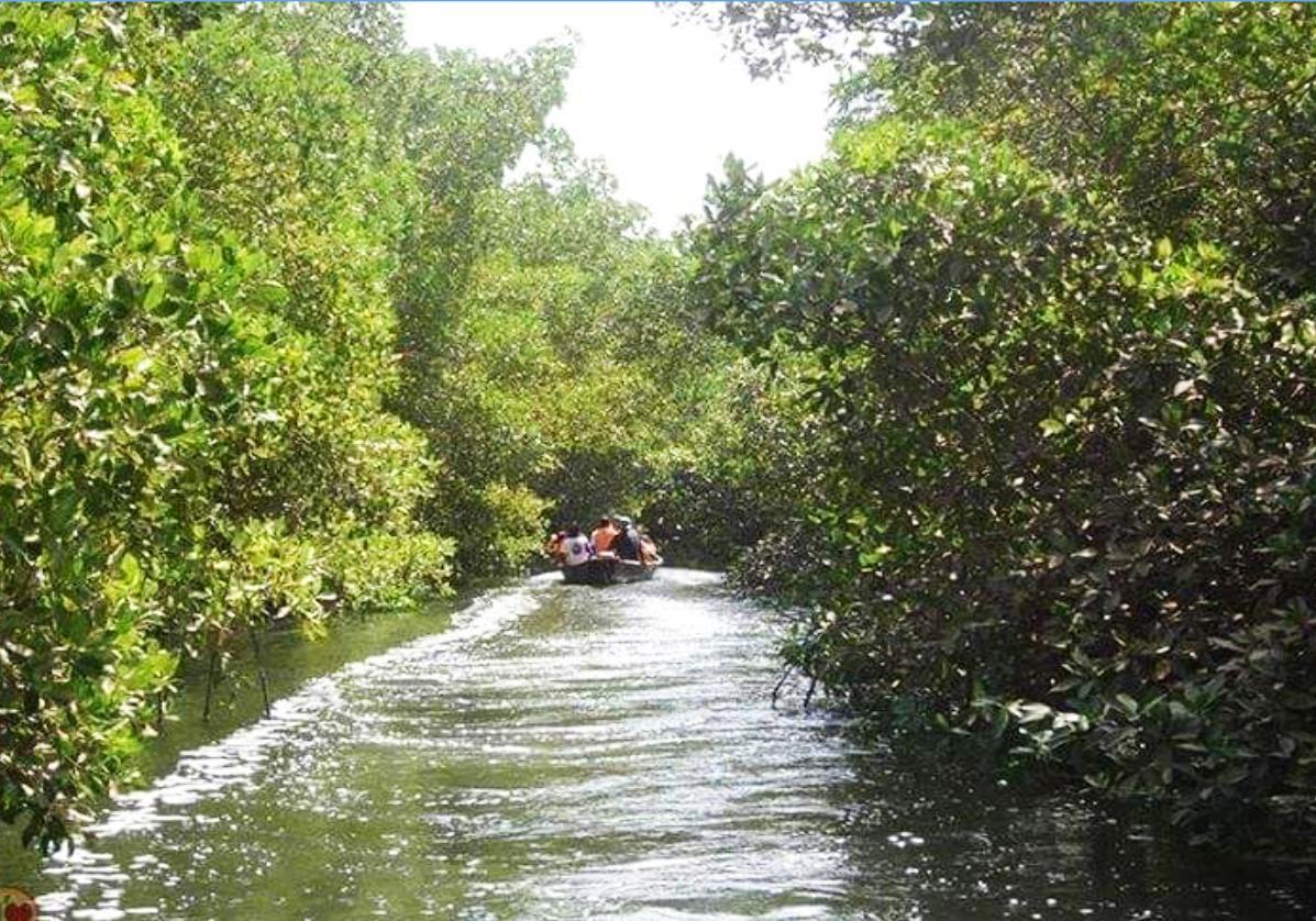 Excursion en pirogue dans la mangrove de Kaolack