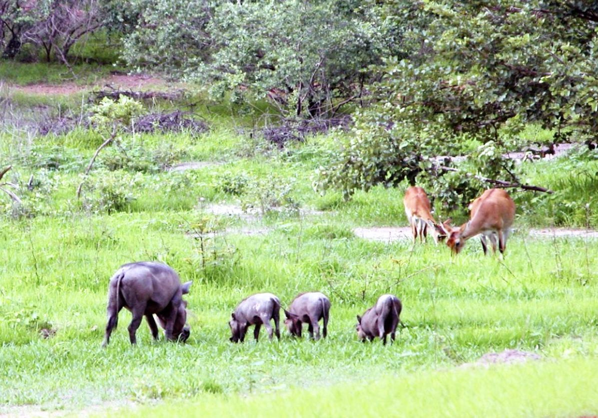 Traversée du parc de Niokolo-Koba