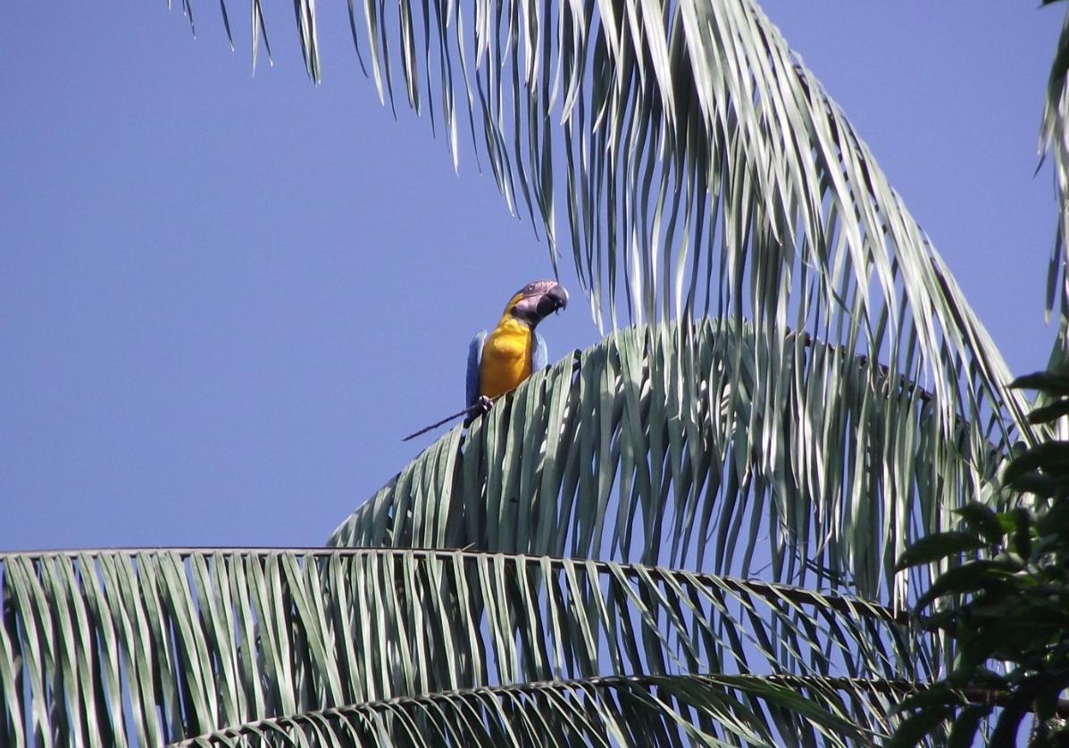 Randonnée dans la foret amazonienne