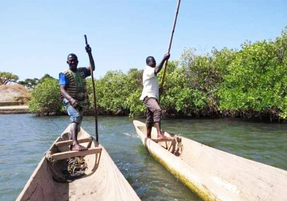Traversée de la mangrove pour rejoindre le village de Eloubaline