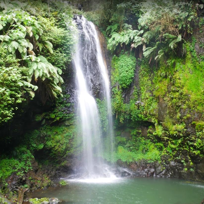 Fraicheur dans les piscines naturelles de la Montagne d'Ambre