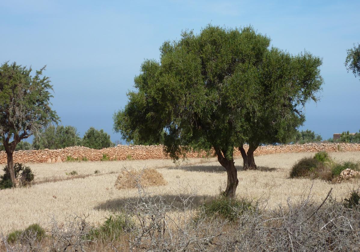 Marche dans les forets d'arganiers