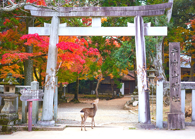Les beaux parcs de Nara