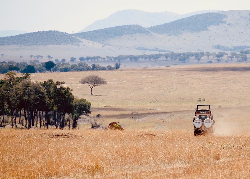 Safari dans le parc du Serengeti