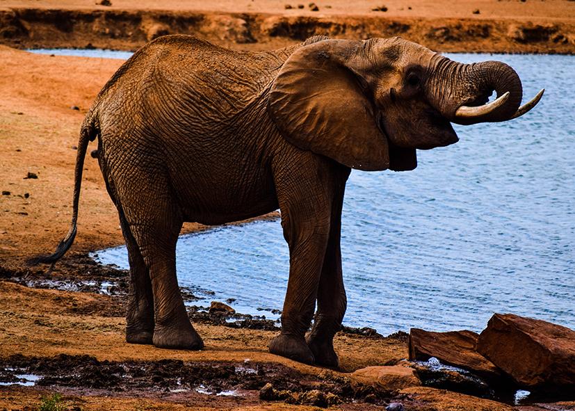 Safari éléphants dans le parc du Serengeti