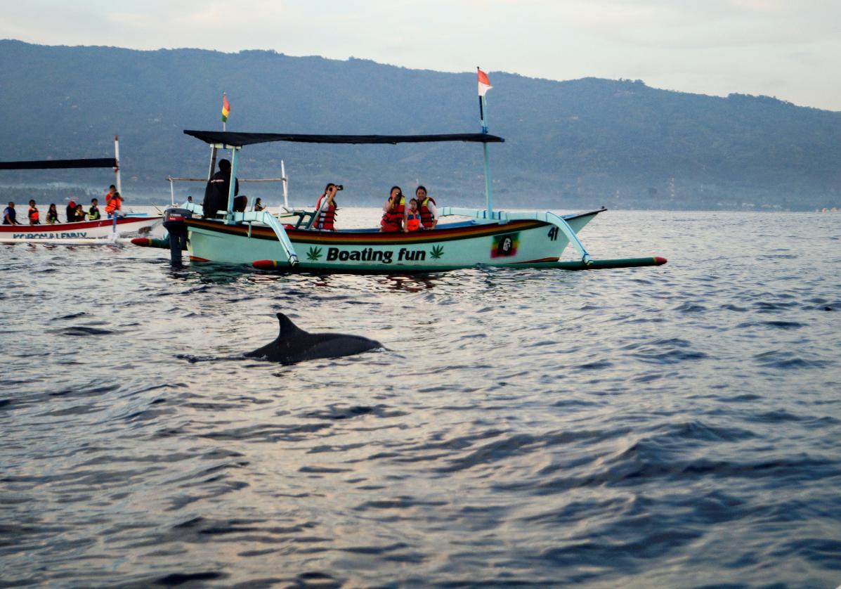 Observez las dauphins à Lovina Beach