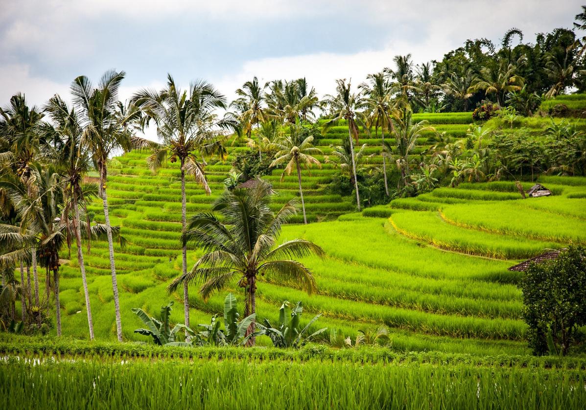 Traversez les paysages de rizières en terrasse