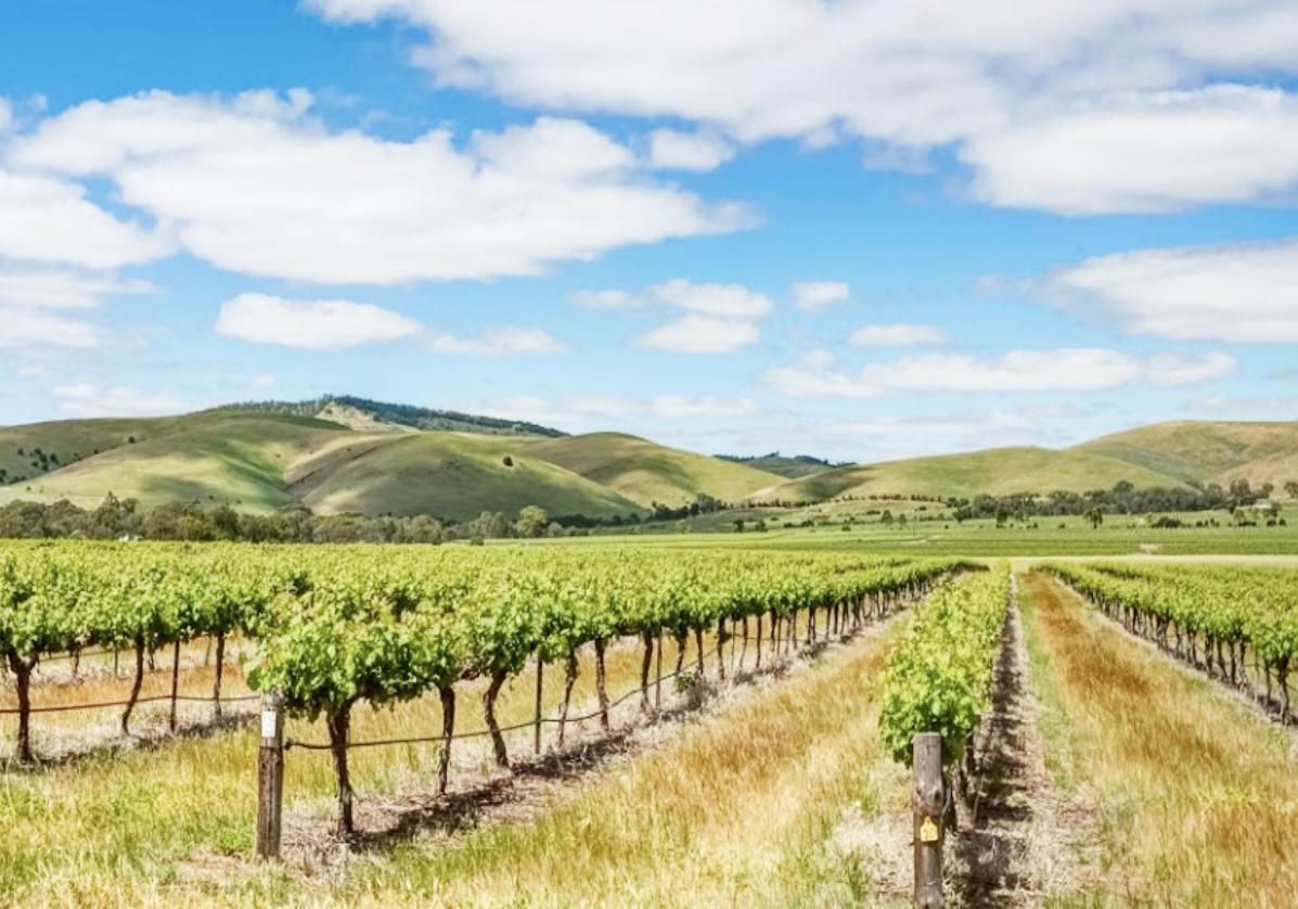 Vignobles de Barossa Valley