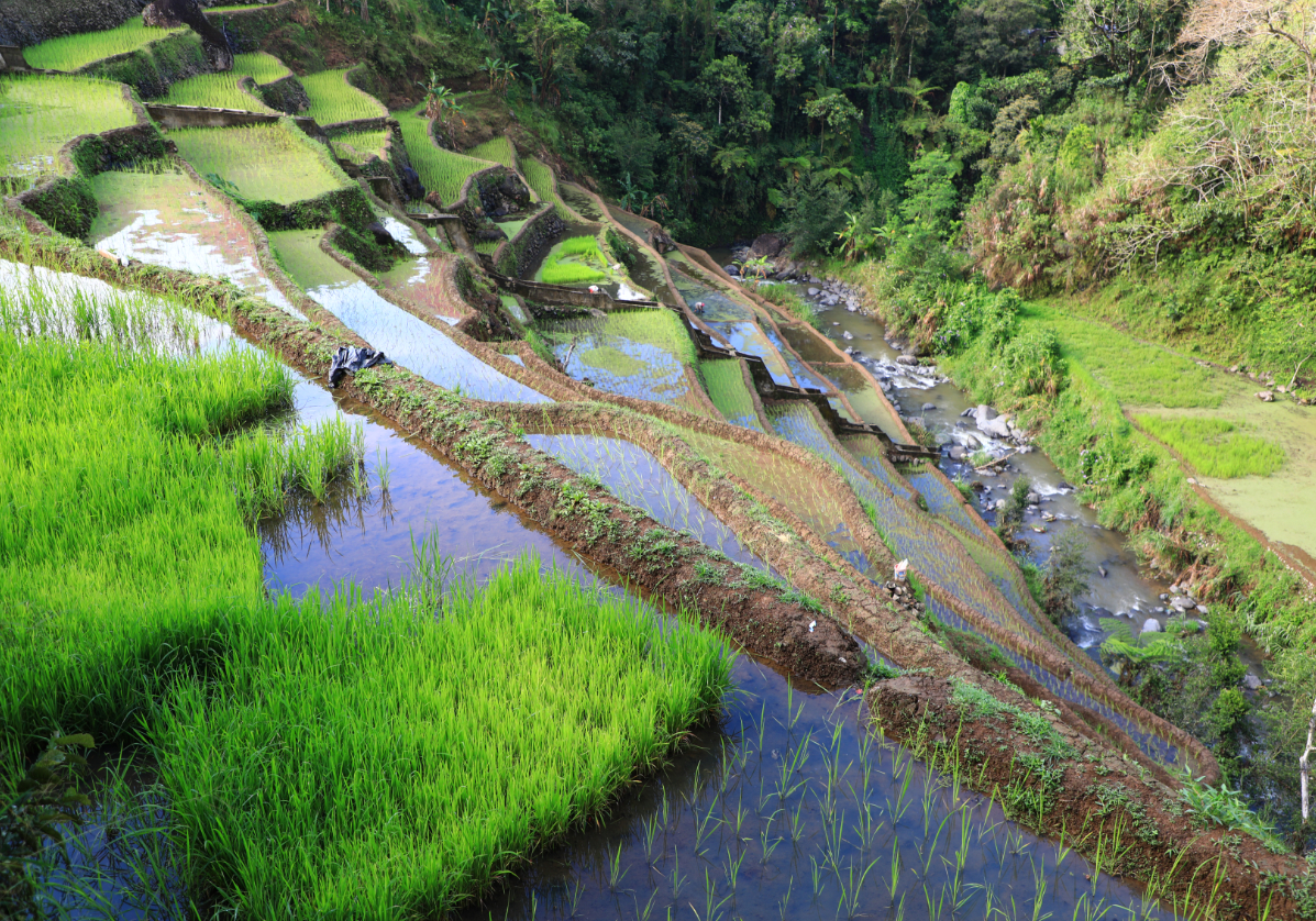 Rizières en terrasses de Banaue