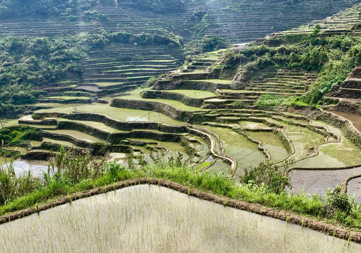 Les belles rizières en escaliers de Bontoc