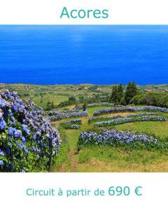 Hortensias sur l'ile de Faial, partir aux Acores en juillet avec Nirvatravel