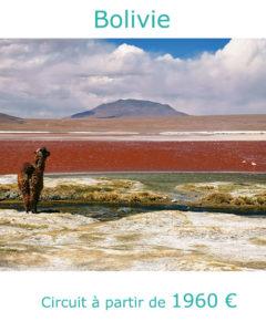 Lama sur la Laguna Colorada, partir en Bolivie au mois d'aout avec Nirvatravel