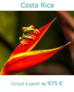 Grenouille dans son biotope, partir au Costa Rica en mars avec Nirvatravel