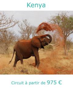 Eléphant dans le parc d'Amboseli, partir au Kenya en mars avec Nirvatravel