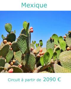 Cactus dans le désert mexicain, partir au Mexique en janvier avec Nirvatravel