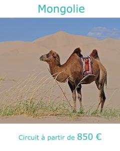Chameau dans le désert de Gobi, partir en Mongolie au mois d'aout avec Nirvatravel