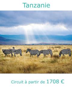 Zèbres dans le parc du Ngorongoro, partir en Tanzanie au mois d'aout avec Nirvatravel