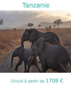 Eléphants dans les plaines du Serengeti, partir en Tanzanie au mois de juin avec Nirvatravel